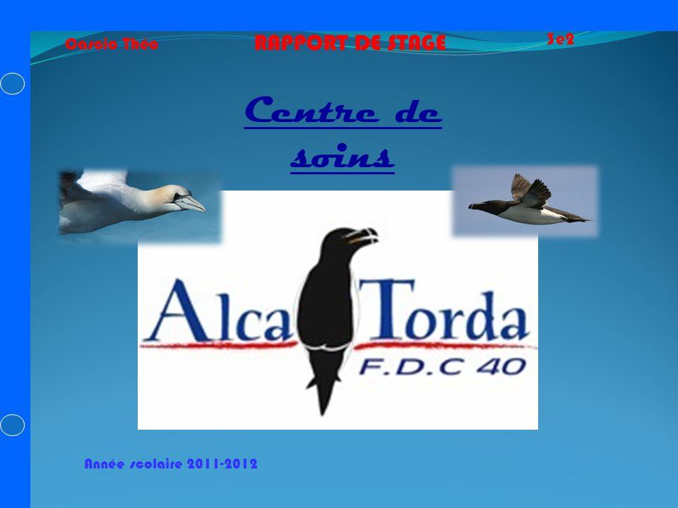 Cascio Théo 3e2 RAPPORT DE STAGE Centre de soins Année scolaire 2011-2012