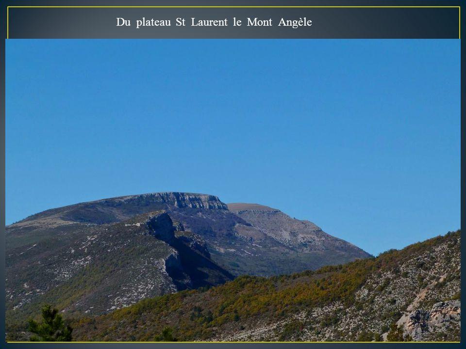 Le plateau de St Laurent ( pays des vautours ) Rémuzat