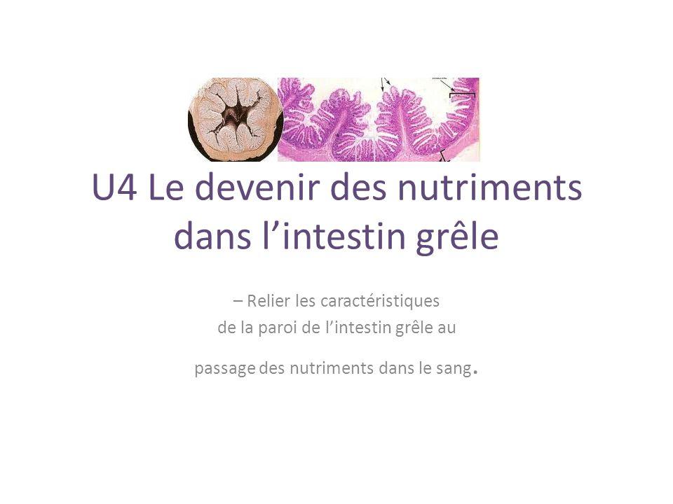U4 Le devenir des nutriments dans l'intestin grêle – Relier les caractéristiques de la paroi de l'intestin grêle au passage des nutriments dans le sang.