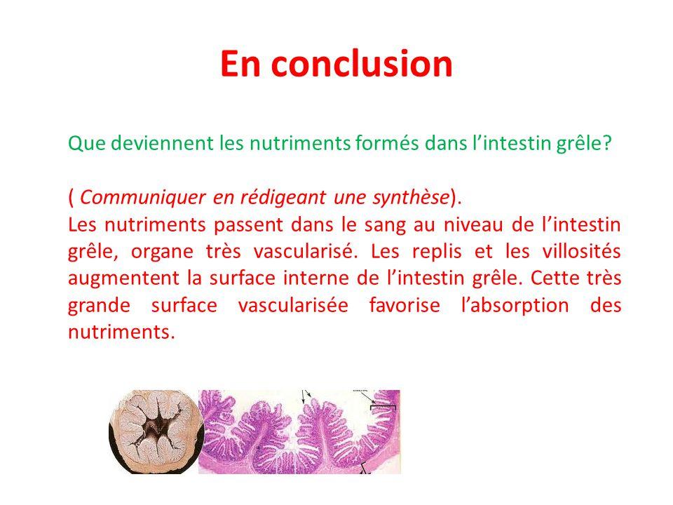 En conclusion Que deviennent les nutriments formés dans l'intestin grêle.