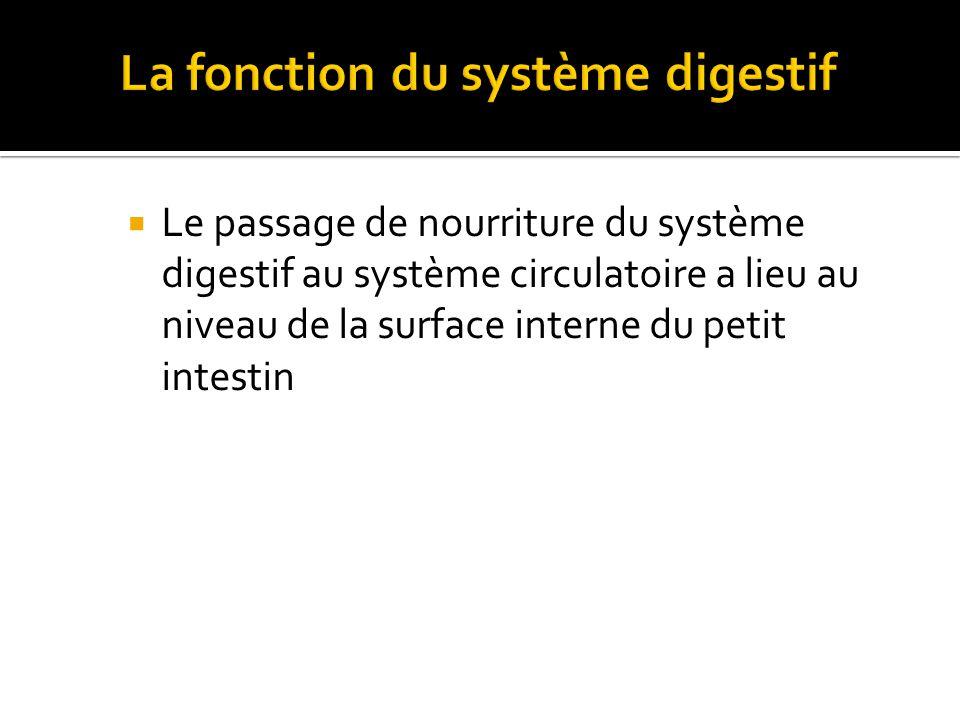  Le passage de nourriture du système digestif au système circulatoire a lieu au niveau de la surface interne du petit intestin