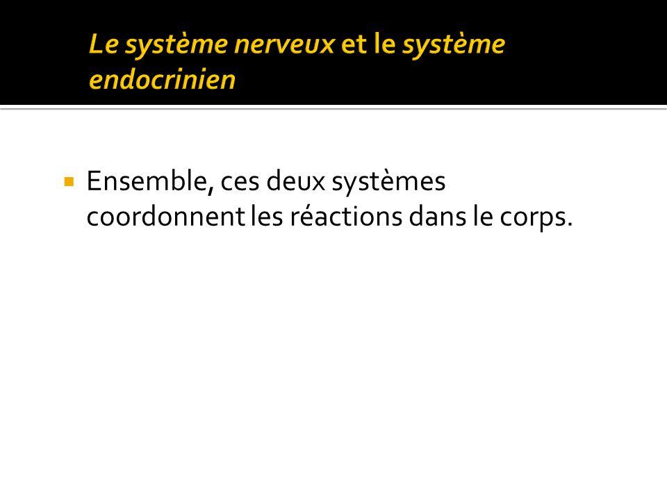  Ensemble, ces deux systèmes coordonnent les réactions dans le corps.