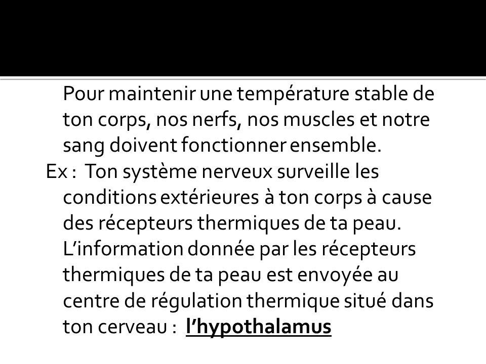 Pour maintenir une température stable de ton corps, nos nerfs, nos muscles et notre sang doivent fonctionner ensemble. Ex : Ton système nerveux survei