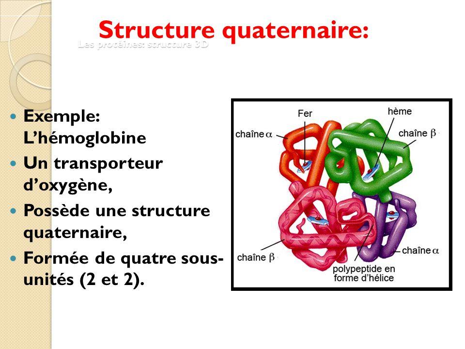"""Résultat de recherche d'images pour """"structure quaternaire protéine"""""""