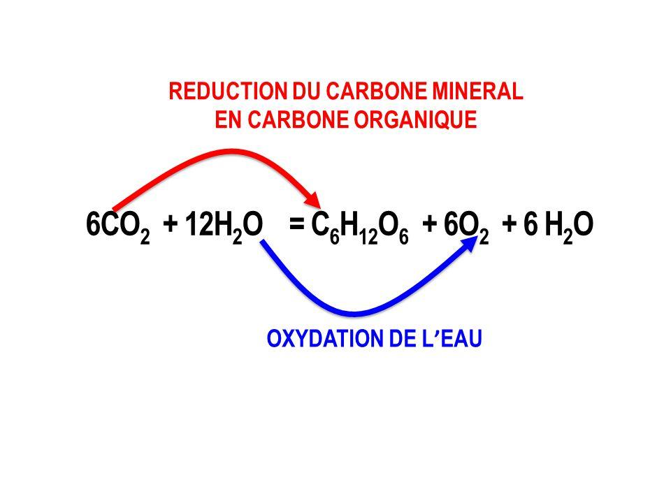 OXYDATION DE L ' EAU REDUCTION DU CARBONE MINERAL EN CARBONE ORGANIQUE 6CO 2 + 12H 2 O = C 6 H 12 O 6 + 6O 2 + 6 H 2 O