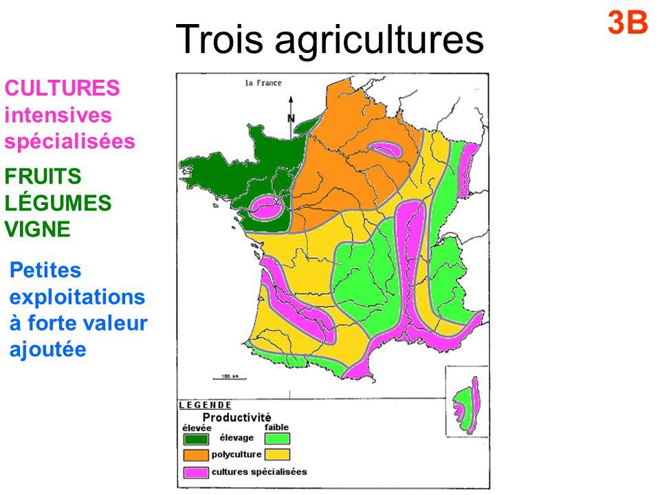 Trois agricultures 3B CULTURES intensives spécialisées FRUITS LÉGUMES VIGNE Petites exploitations à forte valeur ajoutée