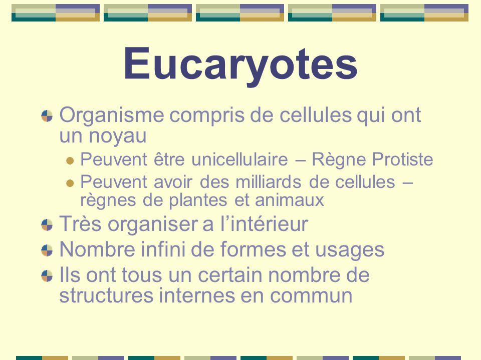 Eucaryotes Organisme compris de cellules qui ont un noyau Peuvent être unicellulaire – Règne Protiste Peuvent avoir des milliards de cellules – règnes de plantes et animaux Très organiser a l'intérieur Nombre infini de formes et usages Ils ont tous un certain nombre de structures internes en commun