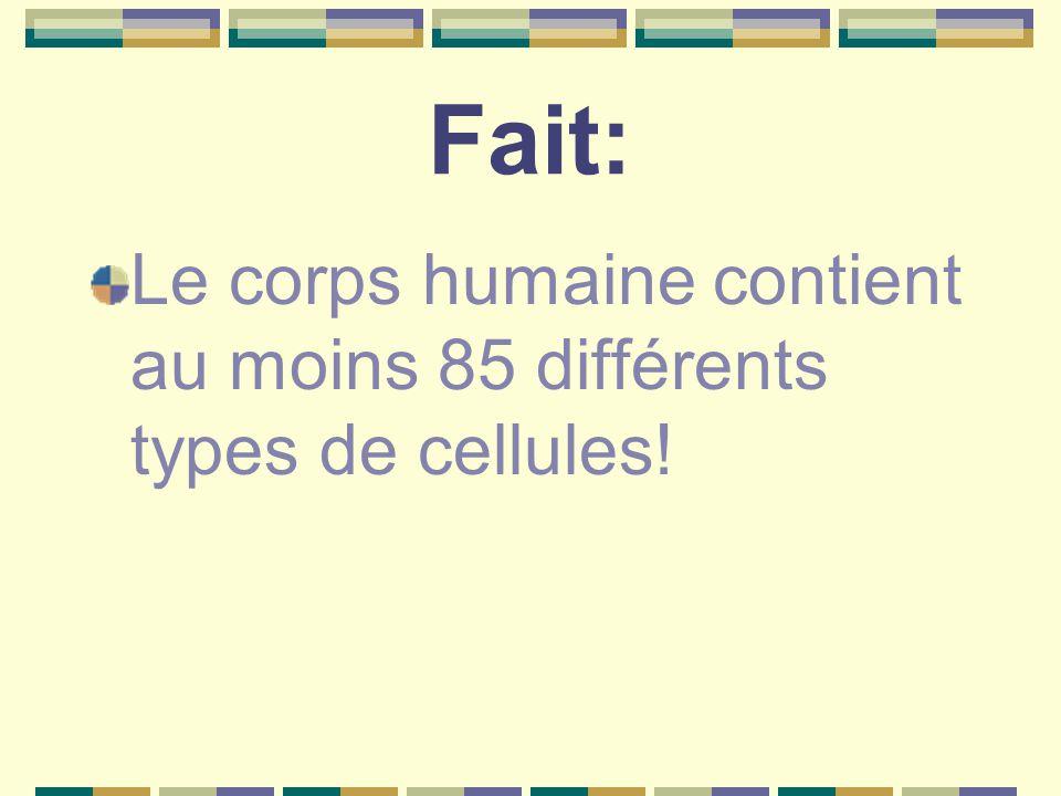 Fait: Le corps humaine contient au moins 85 différents types de cellules!