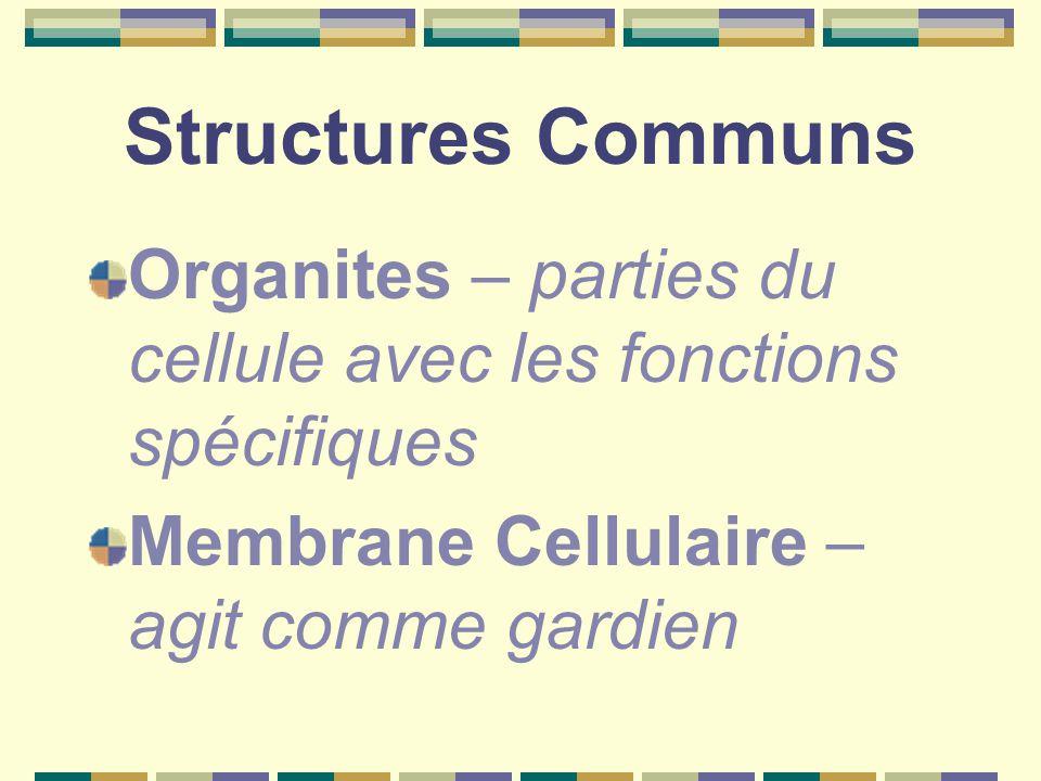 Structures Communs Organites – parties du cellule avec les fonctions spécifiques Membrane Cellulaire – agit comme gardien