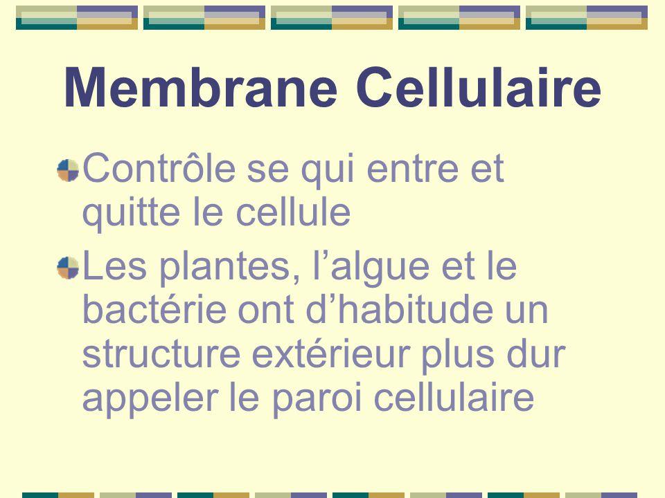 Membrane Cellulaire Contrôle se qui entre et quitte le cellule Les plantes, l'algue et le bactérie ont d'habitude un structure extérieur plus dur appeler le paroi cellulaire