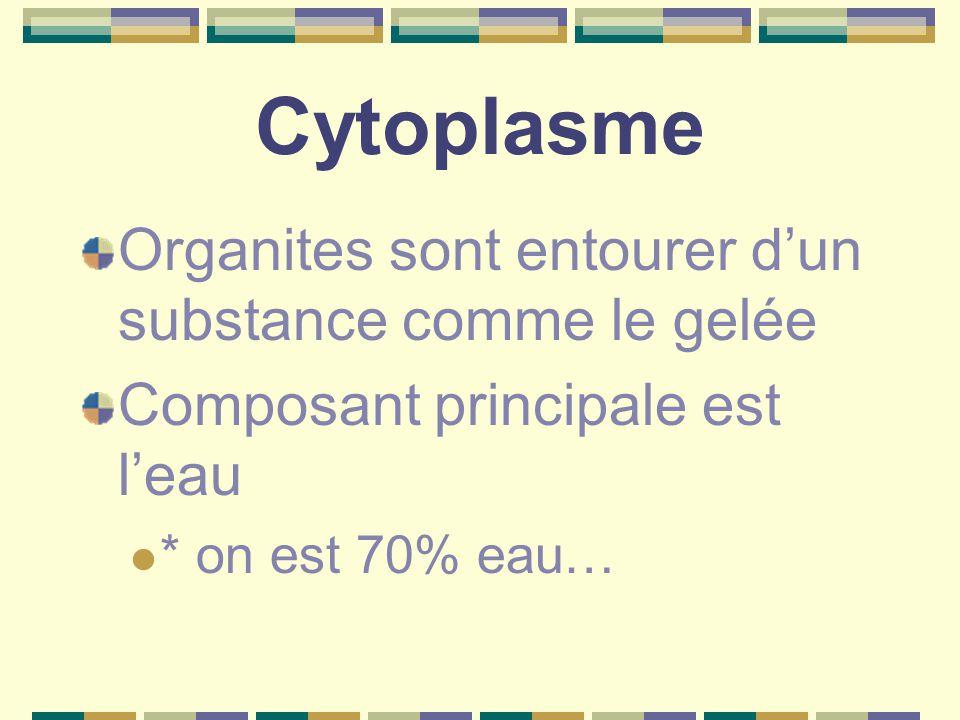 Cytoplasme Organites sont entourer d'un substance comme le gelée Composant principale est l'eau * on est 70% eau…