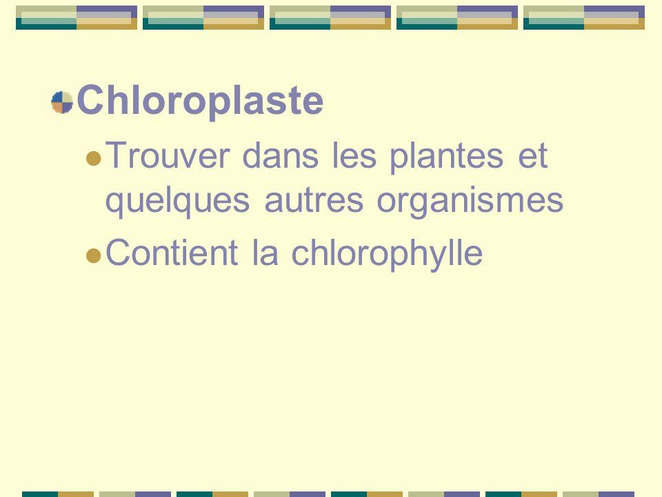 Chloroplaste Trouver dans les plantes et quelques autres organismes Contient la chlorophylle