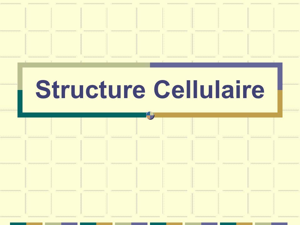 Structure Cellulaire