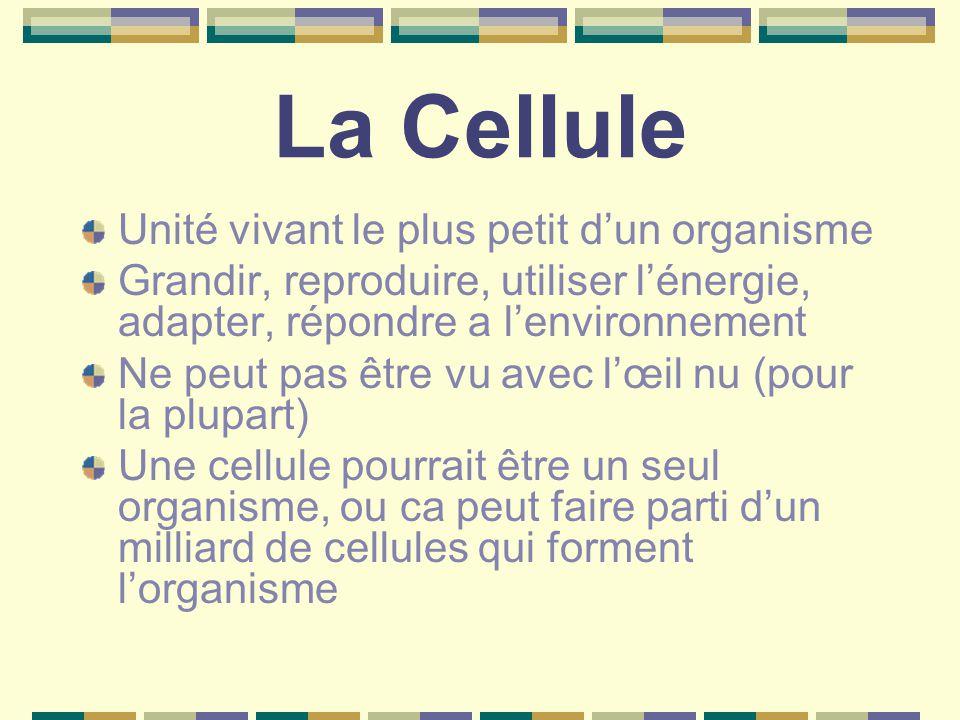 La Cellule Unité vivant le plus petit d'un organisme Grandir, reproduire, utiliser l'énergie, adapter, répondre a l'environnement Ne peut pas être vu avec l'œil nu (pour la plupart) Une cellule pourrait être un seul organisme, ou ca peut faire parti d'un milliard de cellules qui forment l'organisme