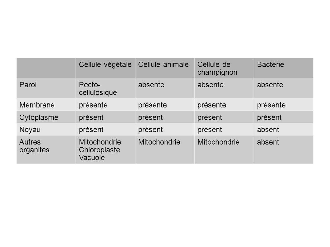 Cellule végétaleCellule animaleCellule de champignon Bactérie ParoiPecto- cellulosique absente Membraneprésente Cytoplasmeprésent Noyauprésent absent Autres organites Mitochondrie Chloroplaste Vacuole Mitochondrie absent