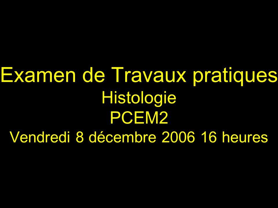 Examen de Travaux pratiques Histologie PCEM2 Vendredi 8 décembre 2006 16 heures