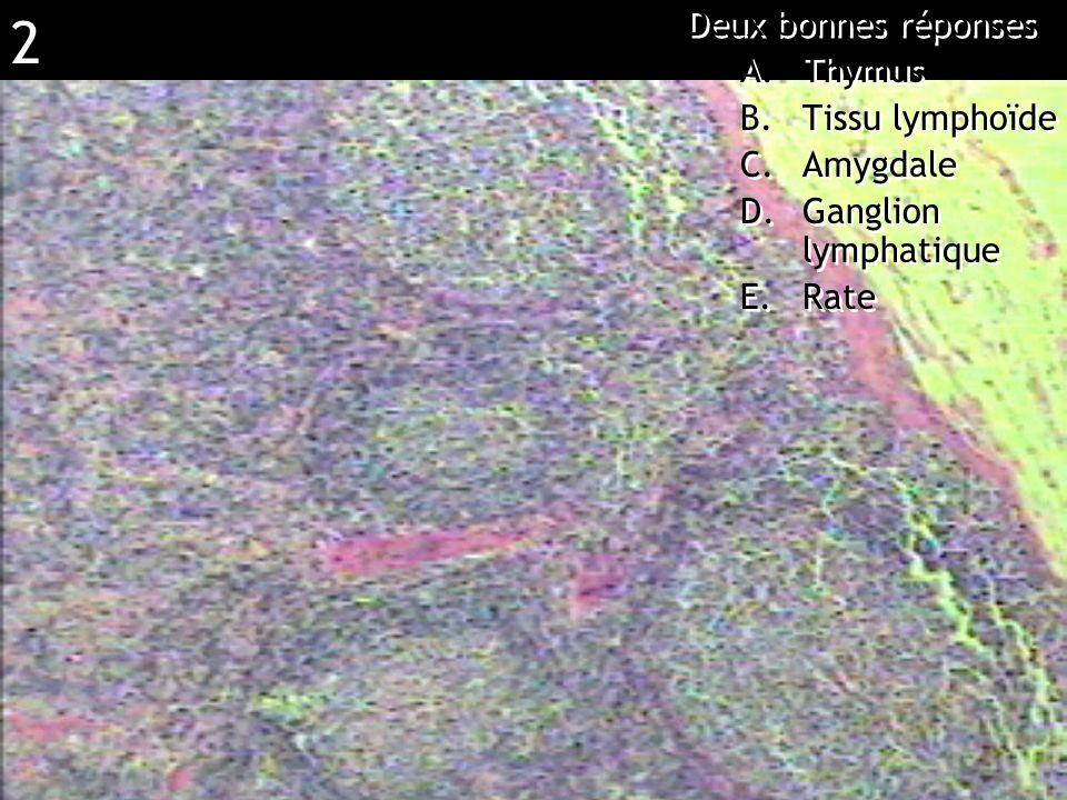 2 Réponse BD (ganglion lymphatique) Deux bonnes réponses A.Thymus B.Tissu lymphoïde C.Amygdale D.Ganglion lymphatique E.Rate Deux bonnes réponses A.Th