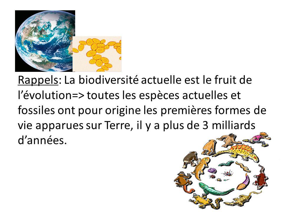 Rappels: La biodiversité actuelle est le fruit de l'évolution=> toutes les espèces actuelles et fossiles ont pour origine les premières formes de vie apparues sur Terre, il y a plus de 3 milliards d'années.