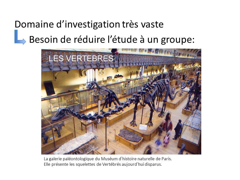 Domaine d'investigation très vaste Besoin de réduire l'étude à un groupe: La galerie paléontologique du Muséum d'histoire naturelle de Paris.