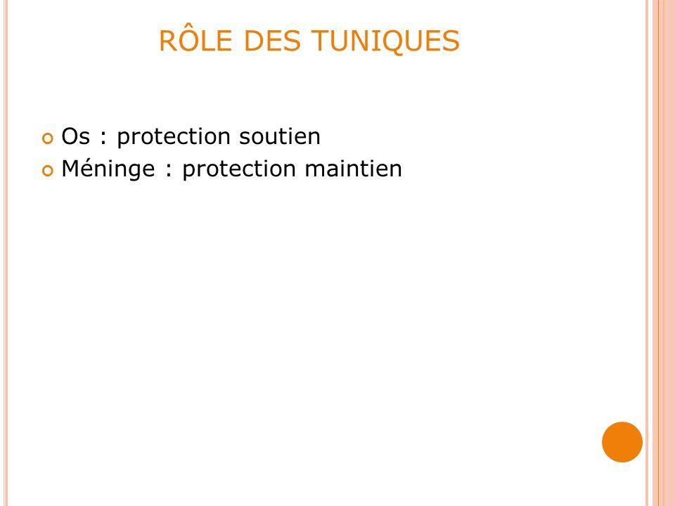 RÔLE DES TUNIQUES Os : protection soutien Méninge : protection maintien