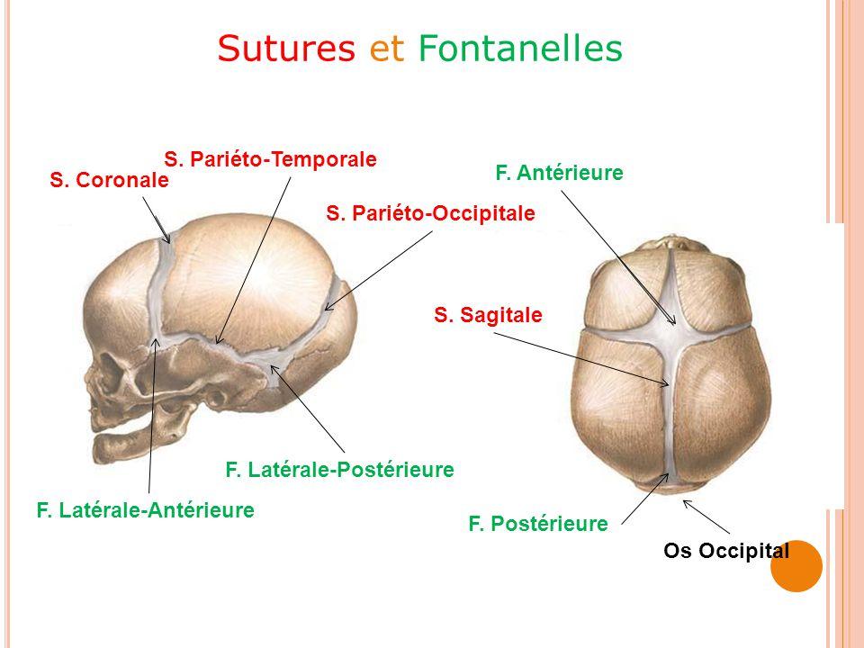 COLONNE VERTÉBRALE Structure générale Rachis cervical Rachis thoracique Coccyx Rachis lombaire Sacrum