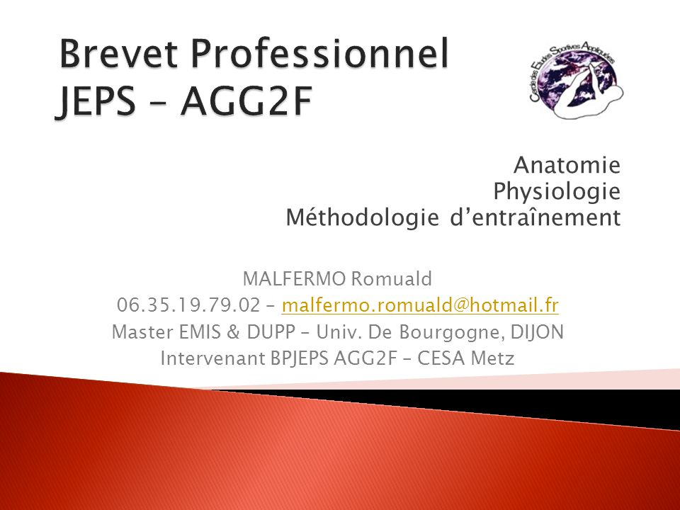 32BPJEPS - 2 : Anatomie La main : Le carpe Le métacarpe Les phalanges - proximales - moyennes - distales I II III IV V