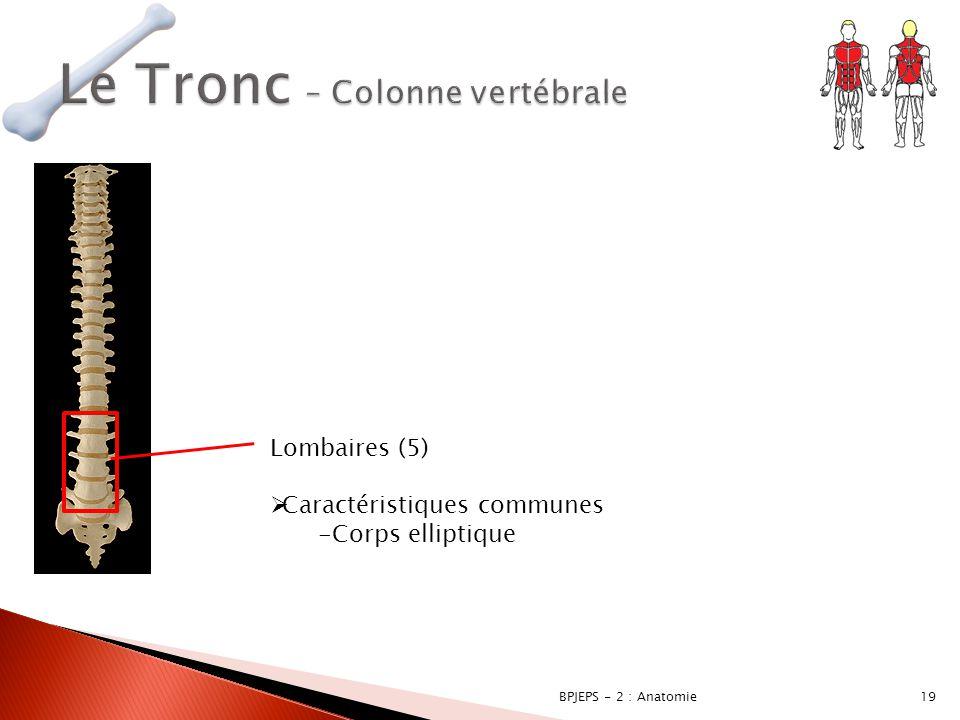 19BPJEPS - 2 : Anatomie Lombaires (5)  Caractéristiques communes -Corps elliptique