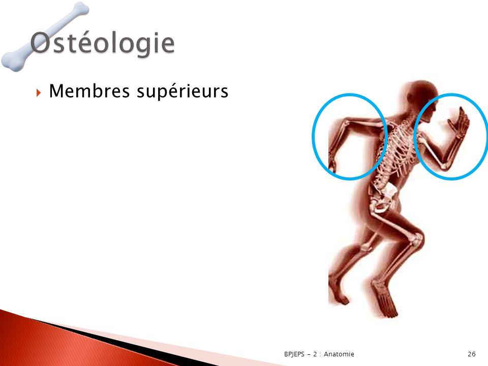  Membres supérieurs 26BPJEPS - 2 : Anatomie