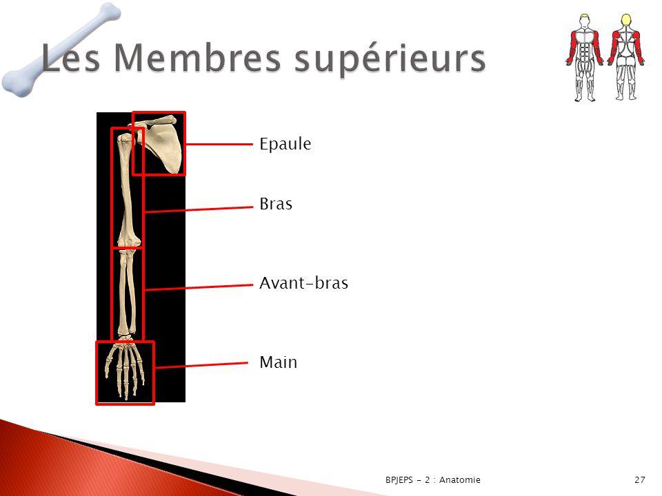27BPJEPS - 2 : Anatomie Epaule Bras Avant-bras Main