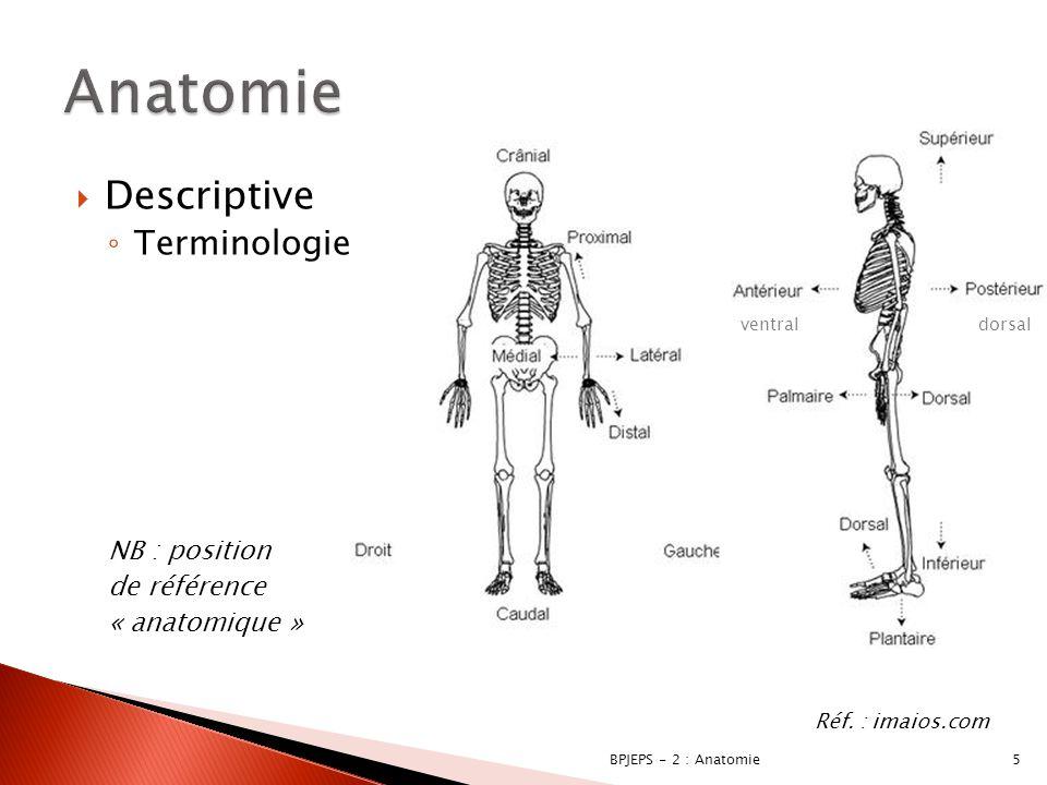  Descriptive ◦ Terminologie  « cardio » : cœur  « myo » : muscle  « hépato » : foie  « phrénique » : diaphragme  « spléni » : « rate »  « opt » : œil 6BPJEPS - 2 : Anatomie Réf.
