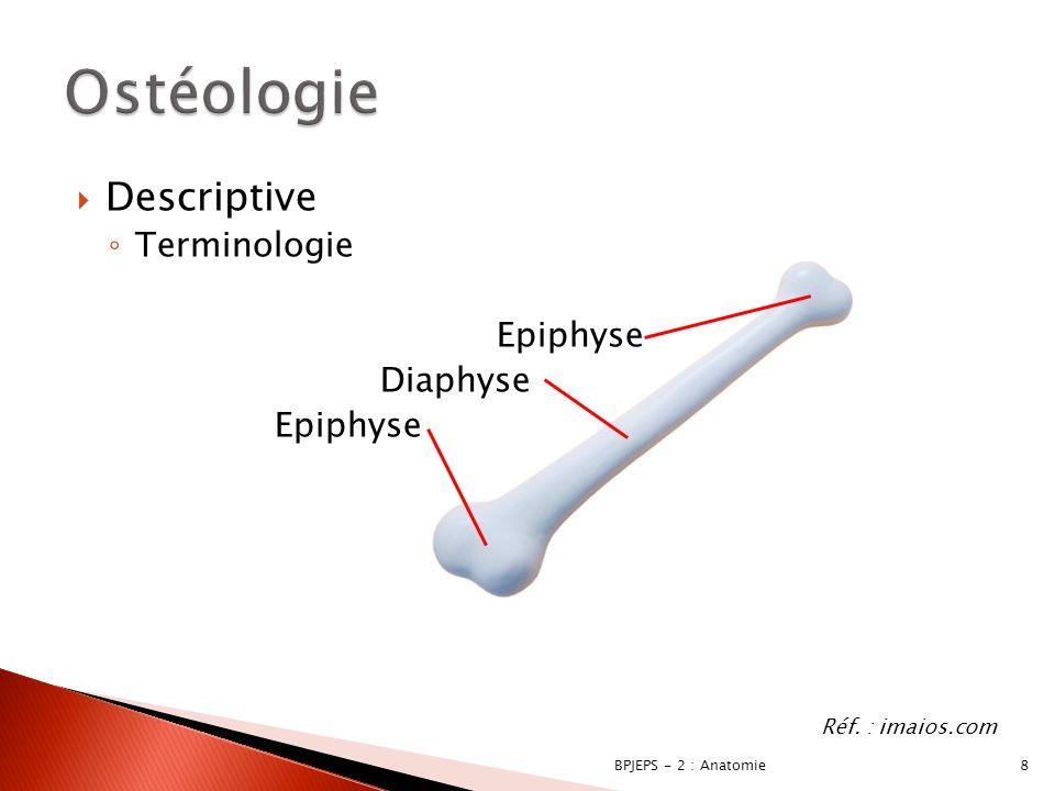 29BPJEPS - 2 : Anatomie La scapula Processus coracoïde Cavité glénoïdaleAcromion