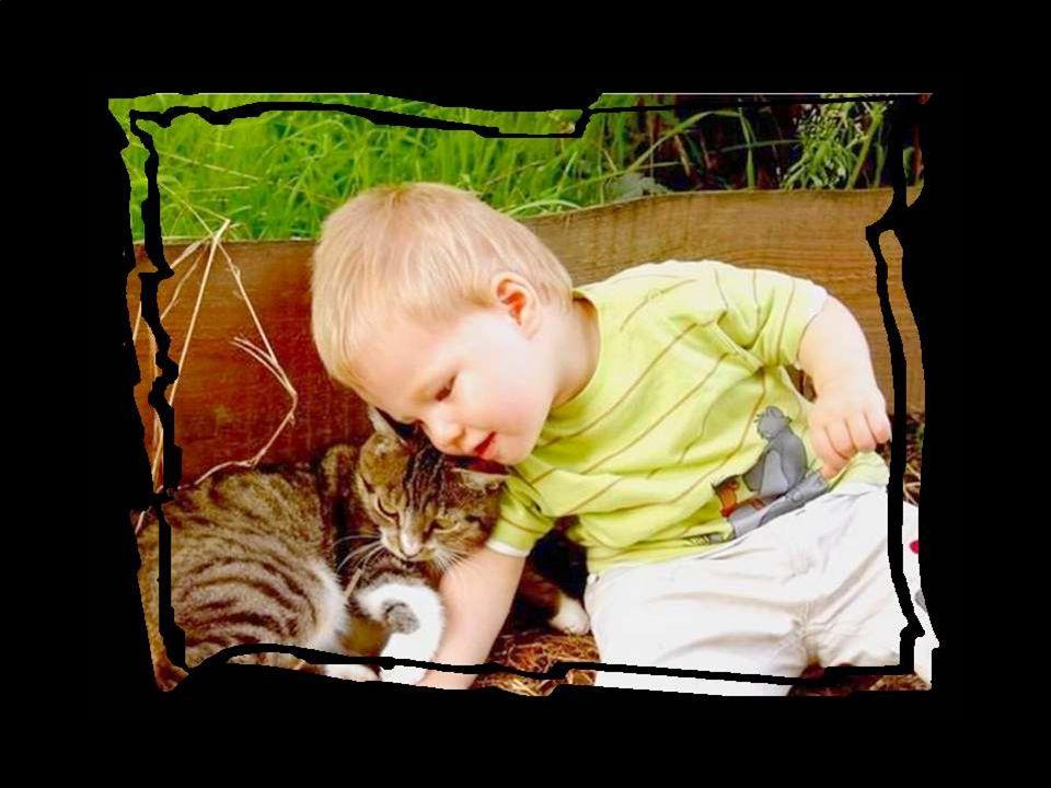 En fait, dans ces histoires, nous parlons de l'amour comme si nous étions des animaux.