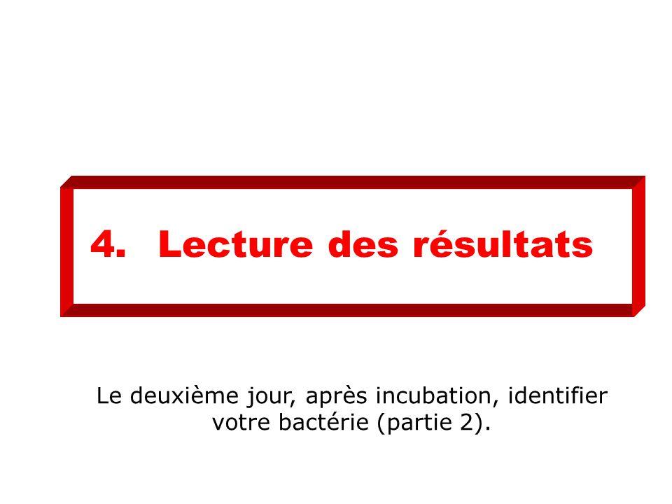 4.Lecture des résultats Le deuxième jour, après incubation, identifier votre bactérie (partie 2).