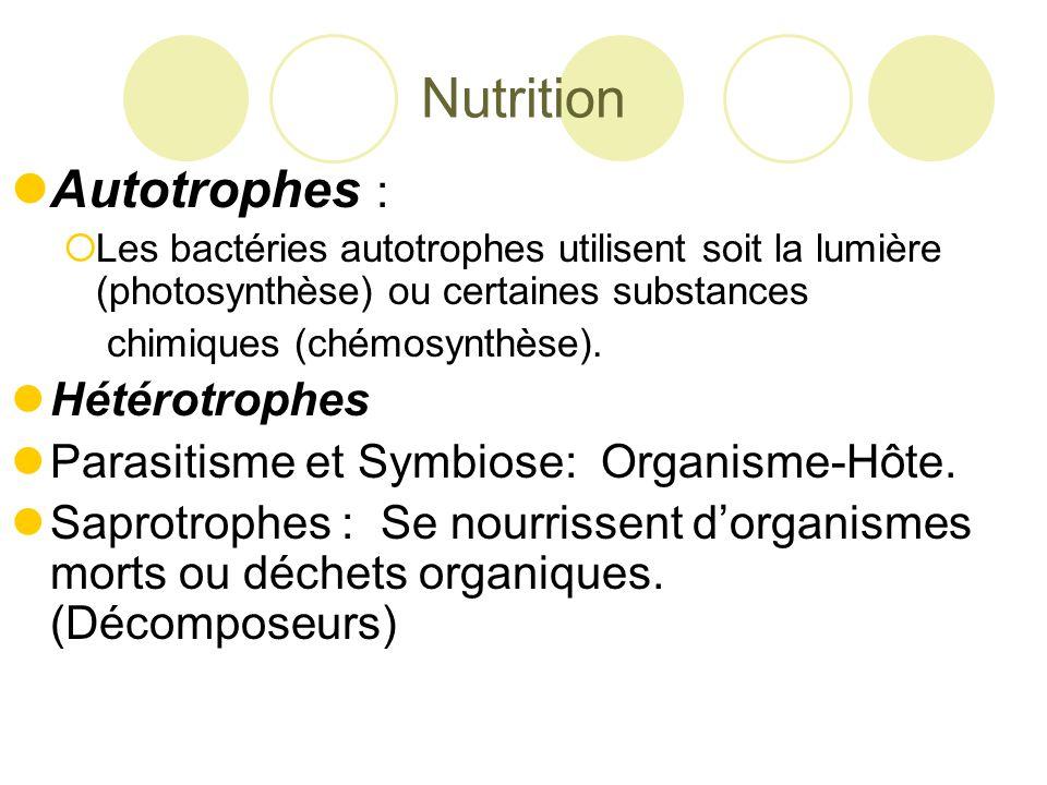 Nutrition Autotrophes :  Les bactéries autotrophes utilisent soit la lumière (photosynthèse) ou certaines substances chimiques (chémosynthèse).