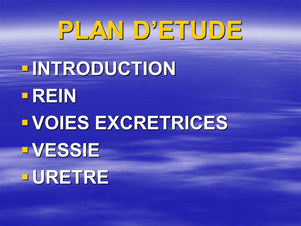 PLAN D'ETUDE  INTRODUCTION  REIN  VOIES EXCRETRICES  VESSIE  URETRE