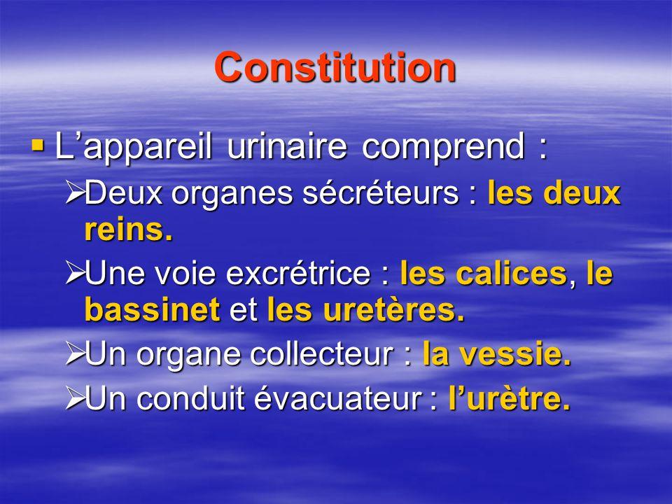 Constitution  L'appareil urinaire comprend :  Deux organes sécréteurs : les deux reins.