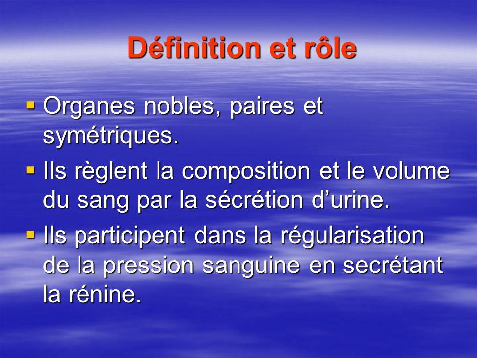 Définition et rôle Définition et rôle  Organes nobles, paires et symétriques.