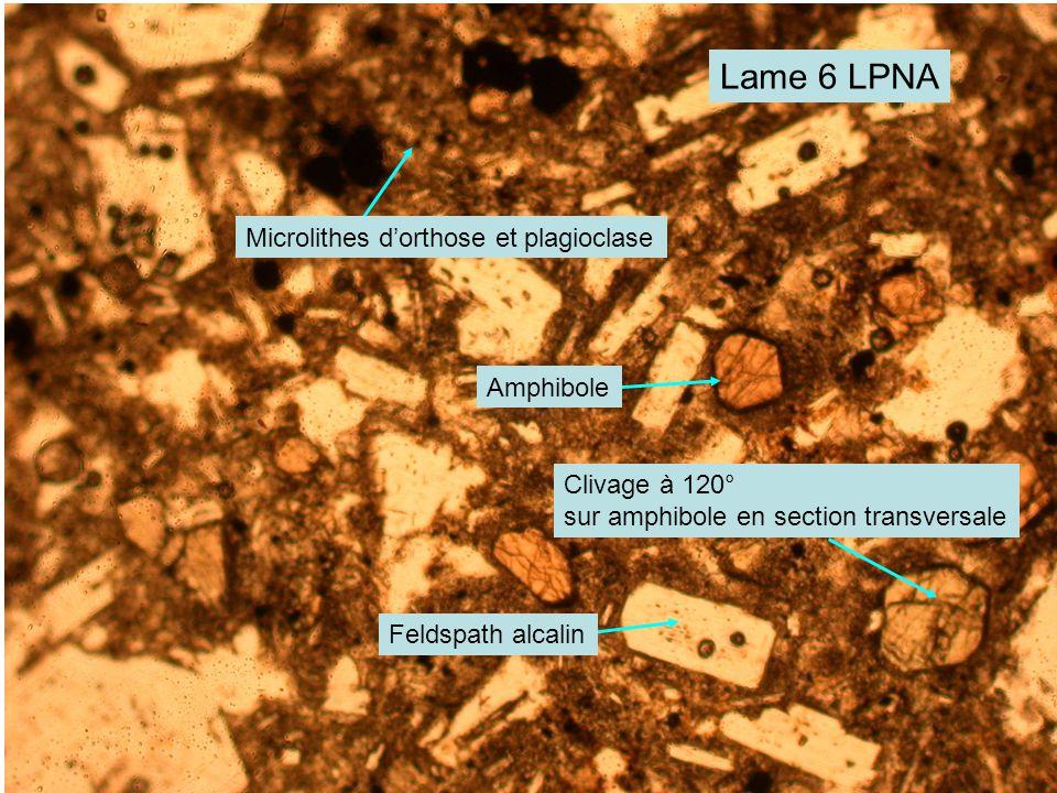 Lame 6 LPNA Amphibole Feldspath alcalin Microlithes d'orthose et plagioclase Clivage à 120° sur amphibole en section transversale