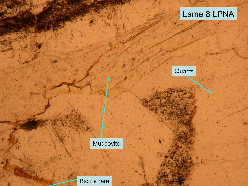 Lame 8 LPNA Muscovite Quartz Biotite rare