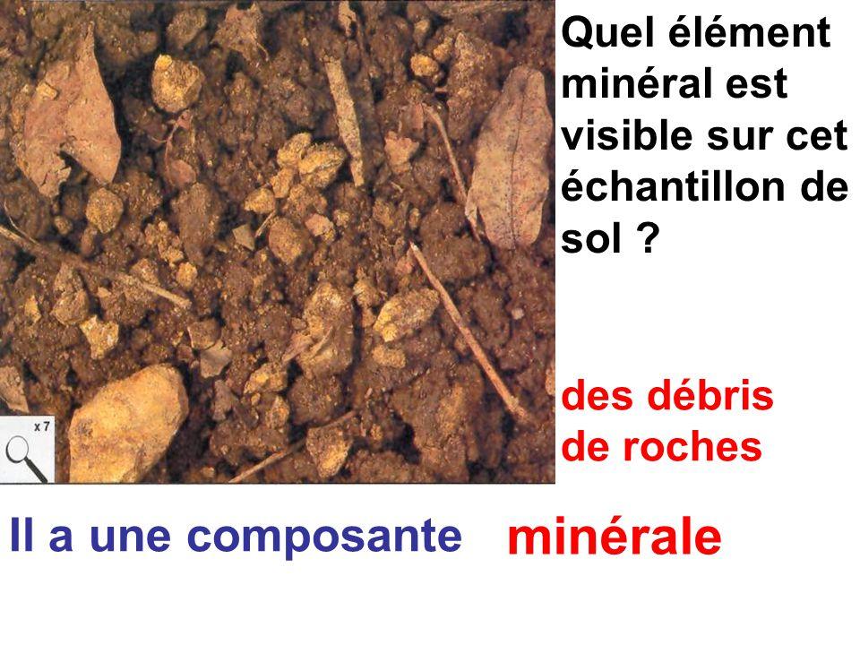 Quel élément minéral est visible sur cet échantillon de sol .