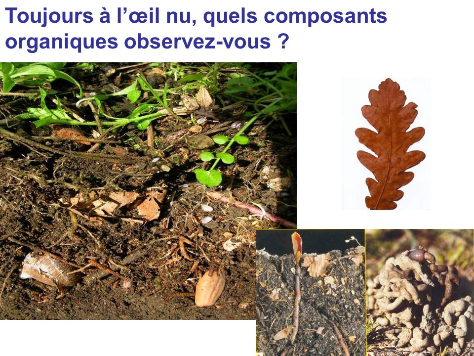 Toujours à l'œil nu, quels composants organiques observez-vous ?