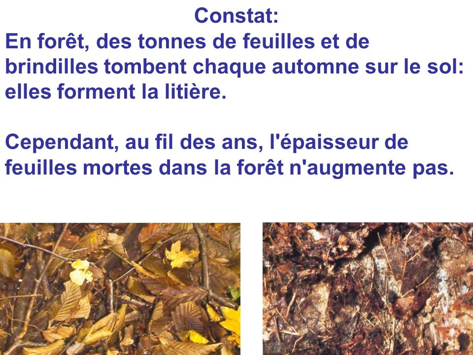 Constat: En forêt, des tonnes de feuilles et de brindilles tombent chaque automne sur le sol: elles forment la litière.