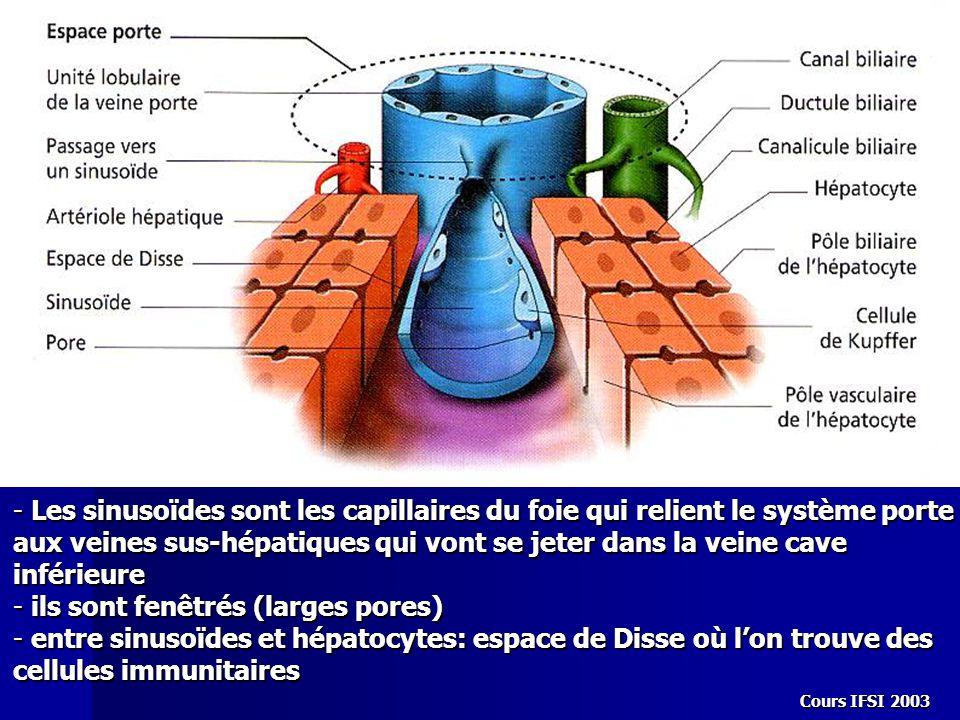 Cours IFSI 2003 - Les sinusoïdes sont les capillaires du foie qui relient le système porte aux veines sus-hépatiques qui vont se jeter dans la veine c