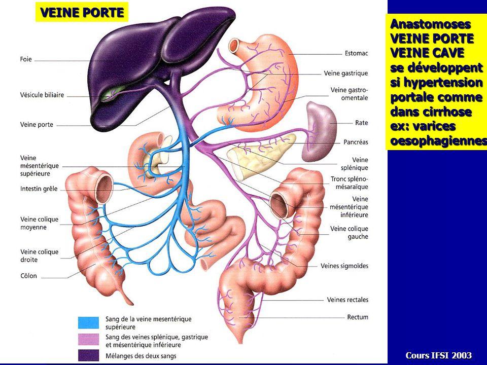 Cours IFSI 2003 VEINE PORTE Anastomoses VEINE CAVE se développent si hypertension portale comme dans cirrhose ex: varices oesophagiennes