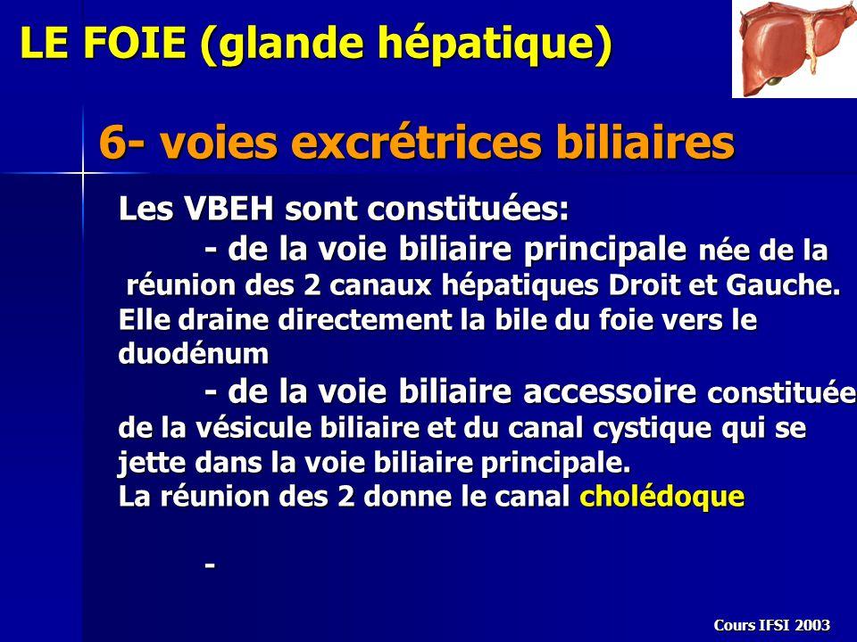 Cours IFSI 2003 6- voies excrétrices biliaires LE FOIE (glande hépatique) Les VBEH sont constituées: - de la voie biliaire principale née de la réunio
