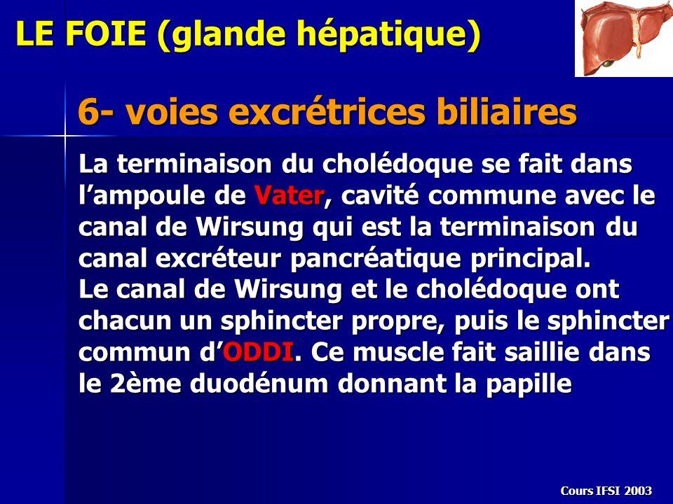 6- voies excrétrices biliaires LE FOIE (glande hépatique) La terminaison du cholédoque se fait dans l'ampoule de Vater, cavité commune avec le canal d
