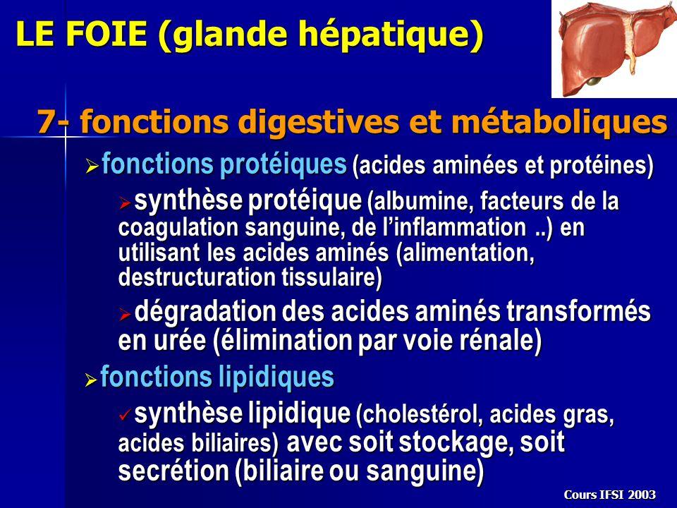 Cours IFSI 2003 7- fonctions digestives et métaboliques LE FOIE (glande hépatique)  fonctions protéiques (acides aminées et protéines)  synthèse pro