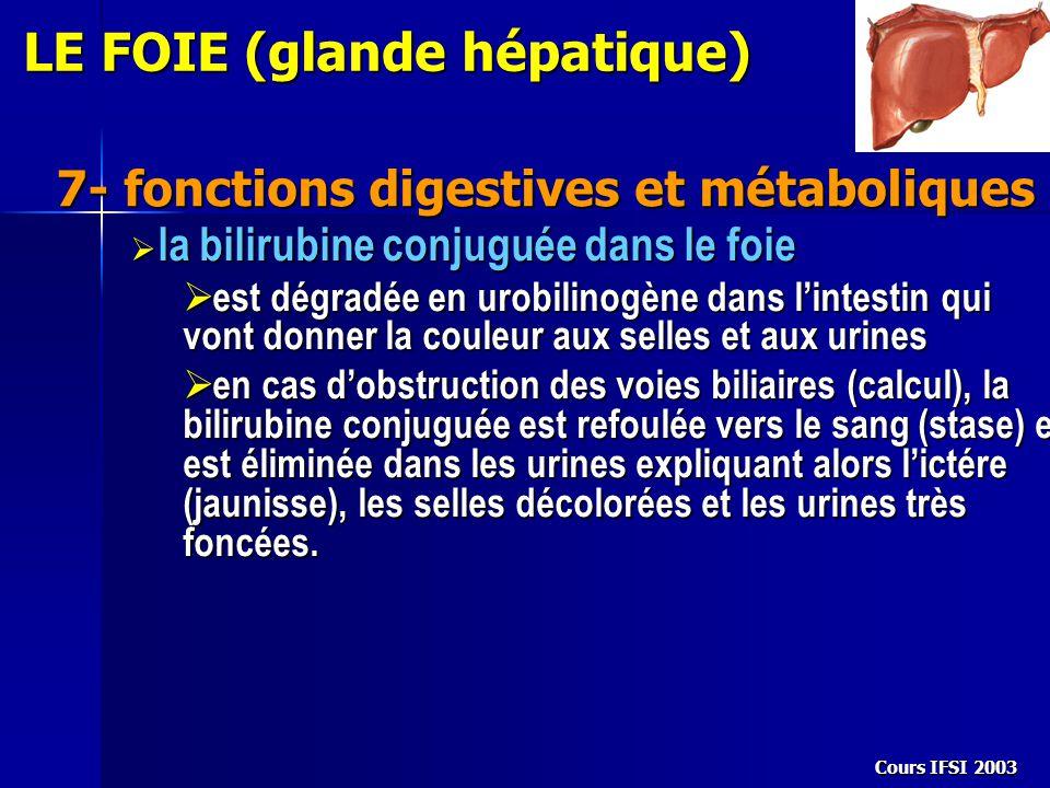 Cours IFSI 2003 7- fonctions digestives et métaboliques LE FOIE (glande hépatique)  la bilirubine conjuguée dans le foie  est dégradée en urobilinog