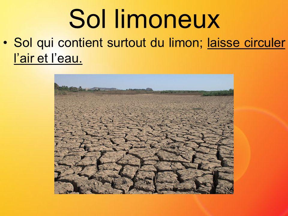 Sol limoneux Sol qui contient surtout du limon; laisse circuler l'air et l'eau.