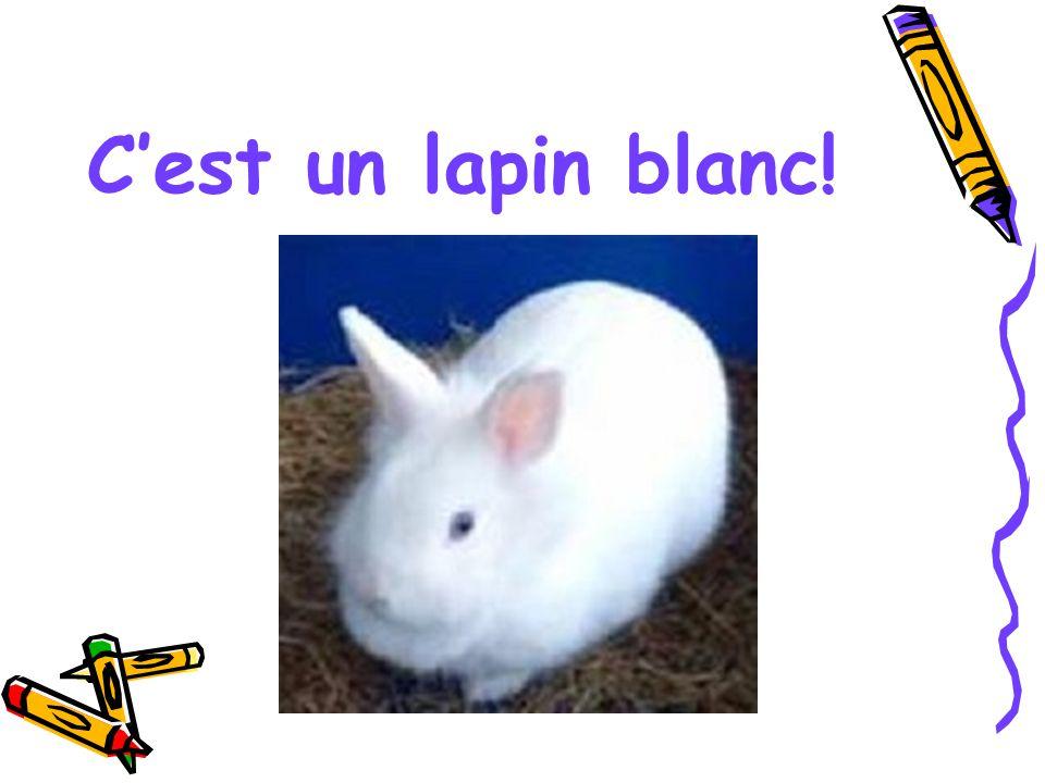 C'est un lapin blanc!